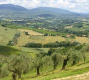 De zomerlandschap in Umbrië (Italië) Stock Foto