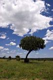 De zomerlandschap van het Park van Kruger Royalty-vrije Stock Afbeeldingen