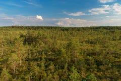 De zomerlandschap van het Virumoeras, het nationale park van Lahemaa stock afbeelding