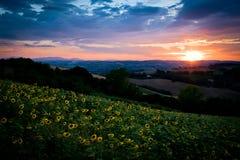 De zomerlandschap, zonsondergang en zonnebloemen Royalty-vrije Stock Fotografie