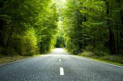 De zomerlandweg met Bomen naast royalty-vrije stock foto