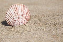 De zomermalplaatje met zeeschelp op zand Royalty-vrije Stock Fotografie
