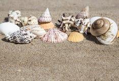 De zomermalplaatje met zeeschelp op zand Stock Fotografie