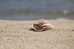 De zomermalplaatje met zeeschelp op zand Royalty-vrije Stock Foto's