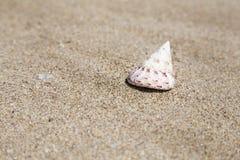 De zomermalplaatje met zeeschelp op zand Stock Foto's