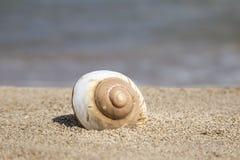 De zomermalplaatje met zeeschelp op zand Stock Afbeeldingen