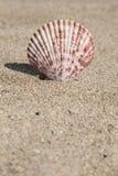 De zomermalplaatje met zeeschelp op zand Royalty-vrije Stock Afbeeldingen