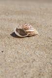 De zomermalplaatje met zeeschelp op zand Royalty-vrije Stock Foto