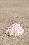 De zomermalplaatje met zeeschelp op zand Stock Afbeelding
