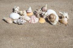 De zomermalplaatje met zeeschelp op zand Stock Foto