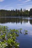 De zomermeer Stock Afbeelding