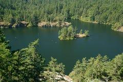 De zomermeer in bossen Stock Foto's