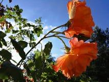 De zomerochtend bij zonsopgang Stock Foto
