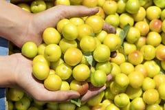 De zomeroogst van gele rijpe pruimen in een doos en een handvol in handen Stock Foto