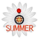 De zomerpictogram met abstract madeliefje een rood lieveheersbeestje op a op een witte achtergrond vector illustratie