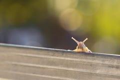 De zomerportret van een koele slak Stock Afbeeldingen