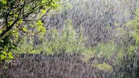 De zomerregen stock footage
