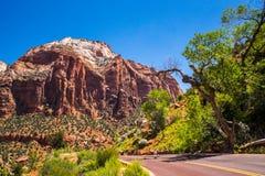 De zomerreis aan toneelzion national park, Utah, de V.S. stock afbeelding