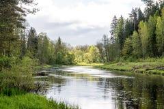 De zomerrivier met bezinningen Stock Foto's