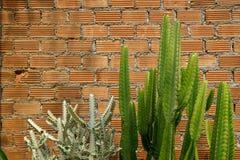 De de zomerscène van ruwe oranje bakstenen muur en mortierachtergrond met verse groene cactus verlaat installatie Stock Afbeeldingen