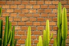 De de zomerscène van ruwe oranje het patroonmuur van de baksteentextuur en de grijze mortierachtergrond met verse heldergroene ca Royalty-vrije Stock Afbeeldingen