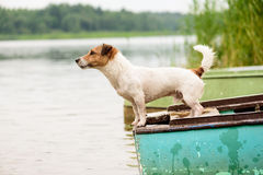 De zomerscène: natte hond die zich op rivierboot bevinden Stock Afbeelding