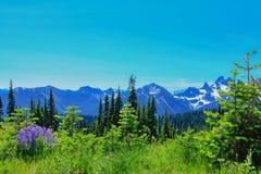 De zomerstijging bij het park van Onderstelrainier national met mening van MT regenachtiger royalty-vrije stock foto