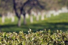 De zomertuin - achtergrond De lentestemming - achtergrond met bomen Stock Foto