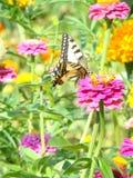 De zomervlinder Royalty-vrije Stock Foto's