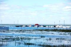 De zomervloed 2013 op de meer hulunbeier toelageweide Stock Fotografie