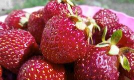 De zomervoedsel Stock Afbeeldingen