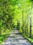 De zomerweg met bomen Stock Foto's