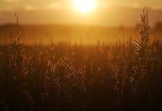 De zomerweide bij zonsondergang Royalty-vrije Stock Foto's