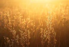 De zomerweide bij zonsondergang Royalty-vrije Stock Afbeelding