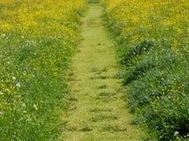 De zomerweide met Groene Gras en Weg Stock Afbeeldingen