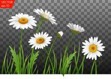 De zomerweide met realistisch madeliefje, kamillebloemen op transparante achtergrond Vector illustratie Stock Afbeeldingen
