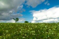 De zomerweide met wilde bloemen Stock Foto