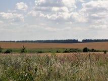 De zomerweide in Rusland Royalty-vrije Stock Afbeelding