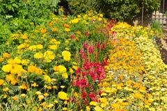 De zomerzonneschijn met kleurrijke rode en gele installaties Stock Afbeeldingen