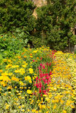 De zomerzonneschijn met kleurrijke rode en gele installaties Stock Afbeelding