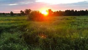 De zomerzonsondergang op het gebied stock videobeelden