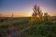 De zomerzonsondergang op het gebied met struiken de zon worden gezien door de bladeren dat Stock Foto