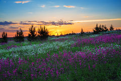 De zomerzonsopgang Stock Afbeelding