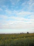 De zon bloeit gebied Royalty-vrije Stock Afbeelding