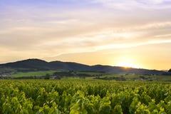 De zon daalt, Beaujolais, Frankrijk Royalty-vrije Stock Foto