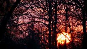 De zon daalt in de takken van bomen en struiken stock videobeelden
