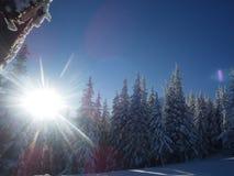 De zon in de winter De door bomen Royalty-vrije Stock Afbeeldingen
