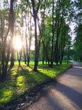 De zon die door bomen in park glanzen stock fotografie