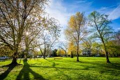De zon die door bomen in Sherwood Gardens Park, in Balti glanzen Royalty-vrije Stock Afbeeldingen