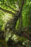 De zon door de bomen en het bos in de ochtend Op een klip Royalty-vrije Stock Afbeeldingen